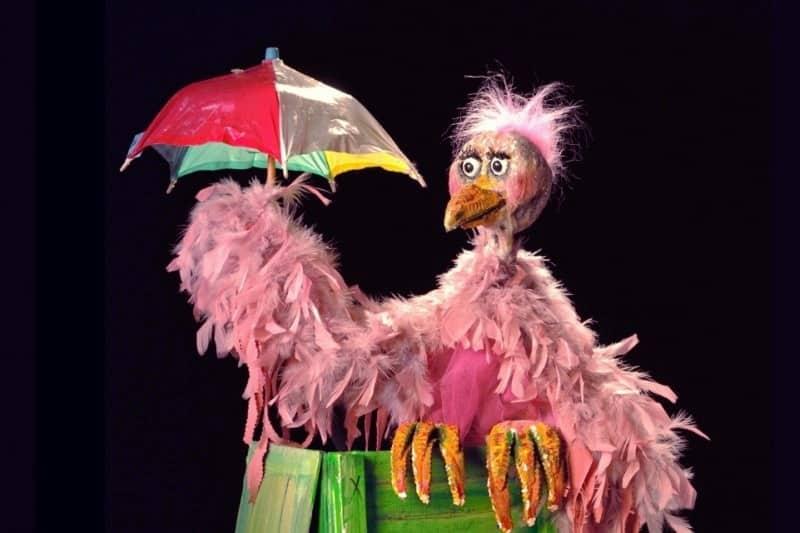 De parapluvogel